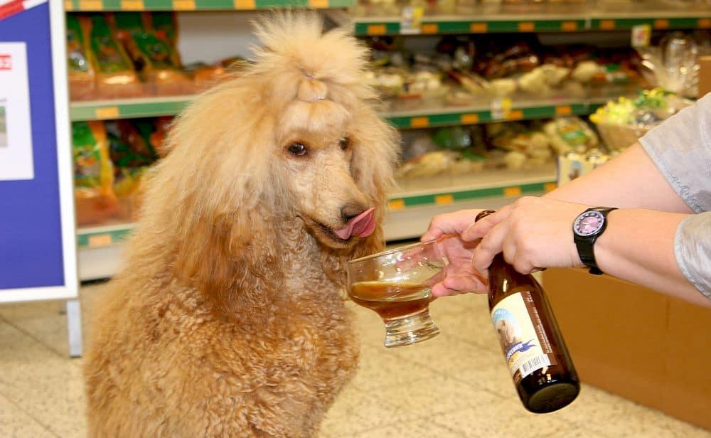 Kwispelbier, o bere pentru prietenul tău